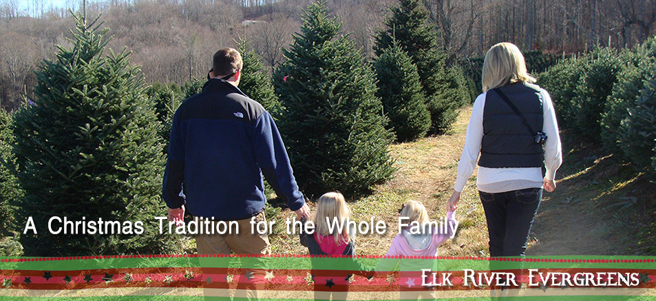 Tips For Christmas Tree Care